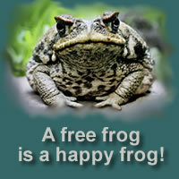 Frogweb_2